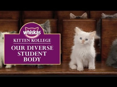 AMV BBDO Takes Us to Kitten Kollege for Adorable New Whiskas Campaign