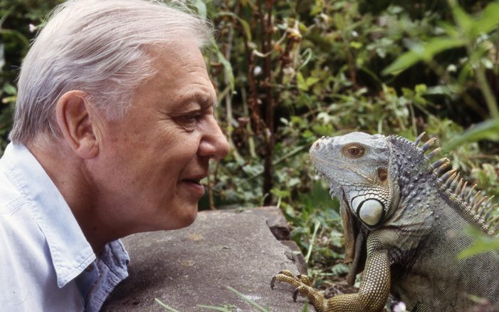 AKQA Presents a Birthday Gift from Sir David Attenborough to the World