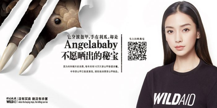 WildAid and Wunderman team-up with Chinese superstar Angelababy to save Pangolins