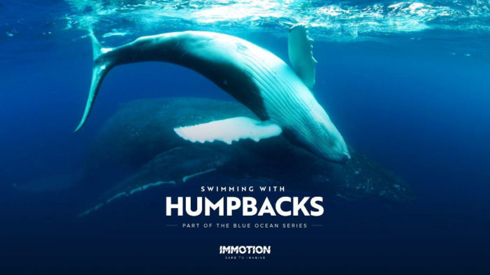 "Immotion releases World first ""Swimming with Humpback Whales"" VR experience"